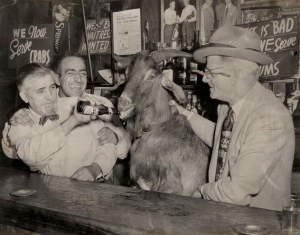 A real goat wandered into the Billy Goat Tavern when it first opened, giving the restaurant its name. Photo from doyouremember.com